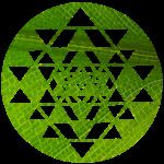 Logo blattgrün